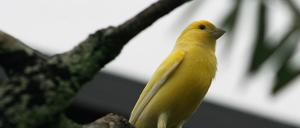 Transparency Report & Warrant Canary for the secure email service Tutanota